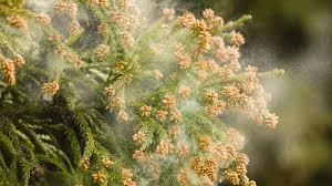 【朗報】「花粉を水に変える」とかいう新素材wwwwwwwwwwwwwwwのサムネイル画像