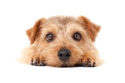 オッサンと犬を飼う実験の結果、オッサンの価値が犬以下であることが科学的に証明されるwwwwwwwwww のサムネイル画像