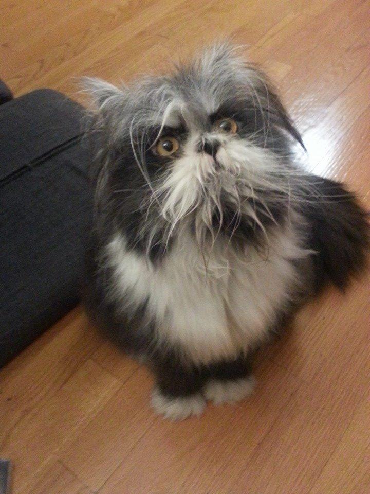 【画像】この写真は犬なの?猫なの? → Twitterで話題にwwwwwwwwwwwのサムネイル画像