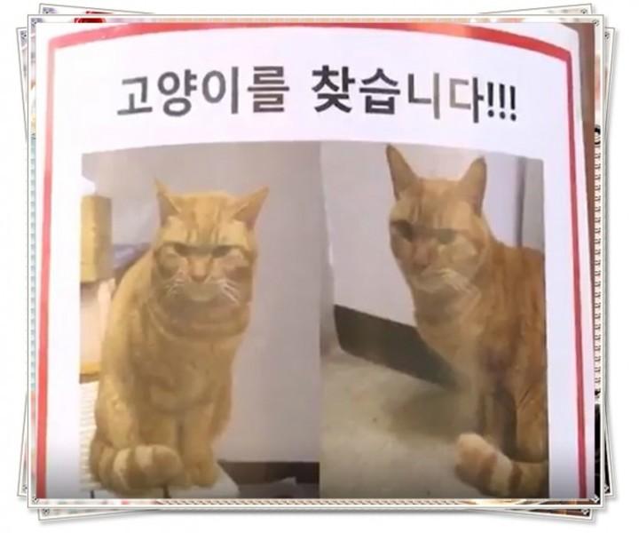 【悲報】韓国初の猫の駅長、行方不明にwwwwwwwwwwwwwwwのサムネイル画像