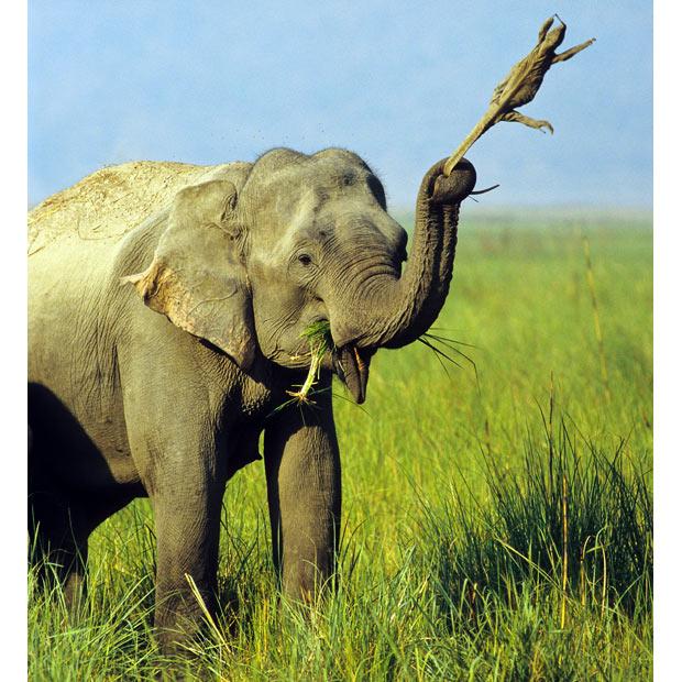 象がトカゲの尻尾を掴んで振り回し遊んでいた画像が撮られるのサムネイル画像
