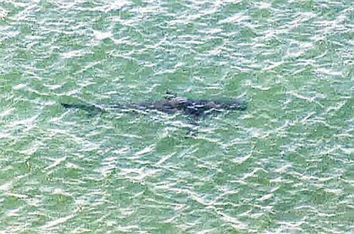 サメを16匹確認したけど、しらす漁の網を張ったから大丈夫。遊泳禁止は解除しますのサムネイル画像