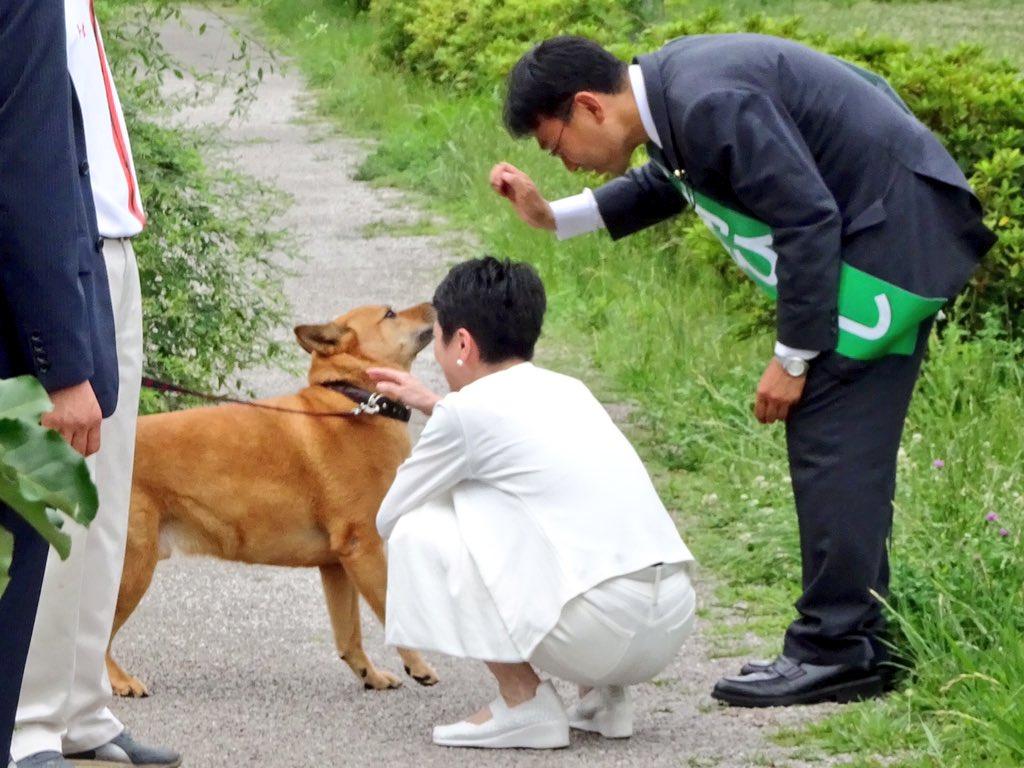 【画像】蓮舫、犬にも嫌われるwwwwwwwwwwwwwwwwのサムネイル画像