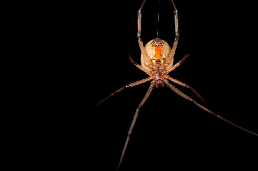 【悲報】熟女専のクモが発見されてしまう・・・のサムネイル画像