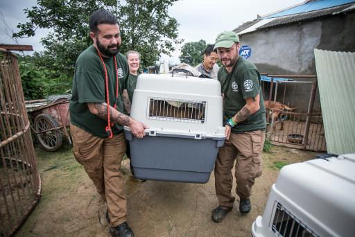 【韓国】国際動物保護団体、韓国の犬農場から149頭の犬を救出のサムネイル画像