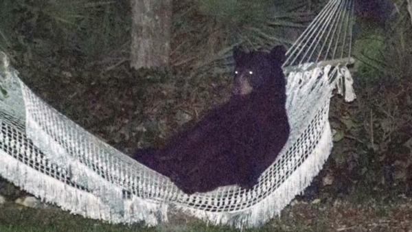 【衝撃】ハンターが熊に襲われる動画が恐ろしすぎると話題に・・・のサムネイル画像