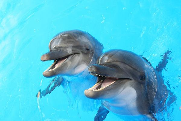 韓国「日本から輸入したイルカがたった5日で死んだ」→ 激怒の糾弾中のサムネイル画像