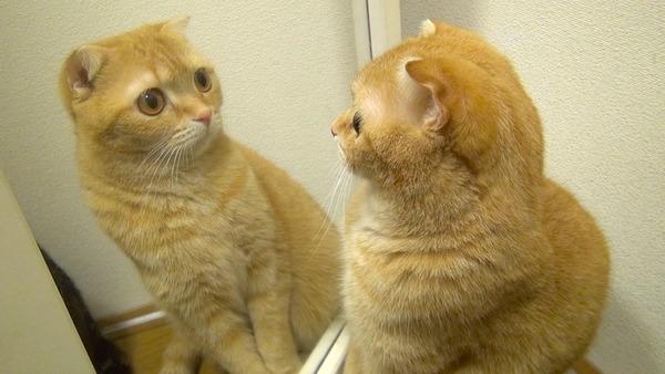 【朗報】鏡をみながら一人で食事をした結果wwwwwwwwwwwwwwwwwwwwwのサムネイル画像