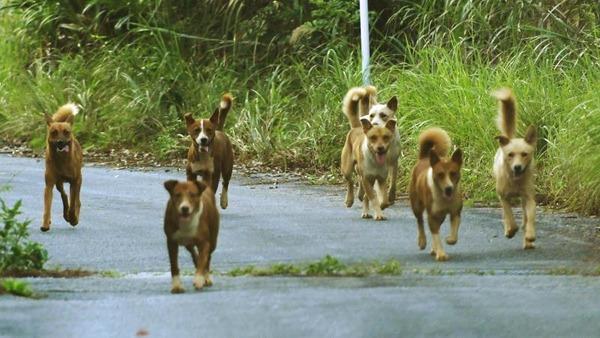【驚愕】国内にまだ野犬がいる県があるらしいのサムネイル画像