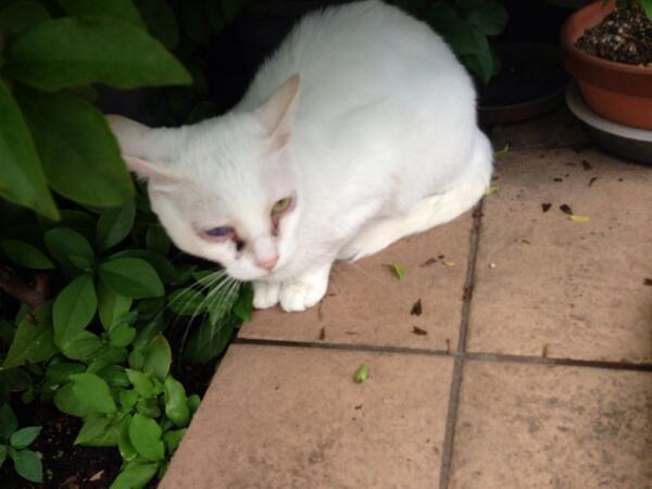 【閲覧注意】蓮舫が飼ってる猫wwwwwwwwwwwwwwwwwwwwwwwwwwwwwwwのサムネイル画像