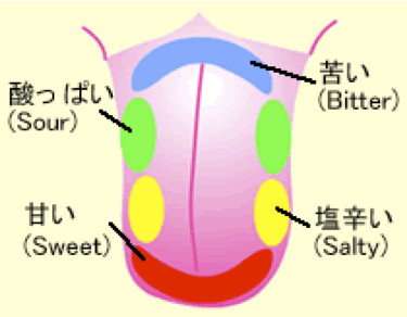 【亜鉛不足か】甘味や苦み認識できない日本人が約30% → 味覚障害の可能性ありのサムネイル画像