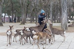 【悲報】奈良公園の鹿が中国人にばかり噛み付く理由wwwwwwwwwwwwwのサムネイル画像