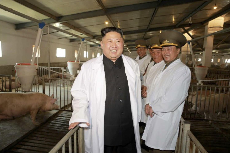 【速報】金正恩が養豚場を視察wwwwwwwwwwwwwwのサムネイル画像