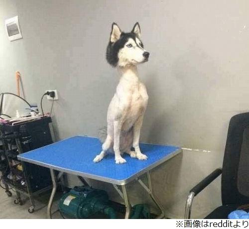 【画像】犬の身体をツルツルにしてみたwwwwwwwwwwwwwwwwwのサムネイル画像