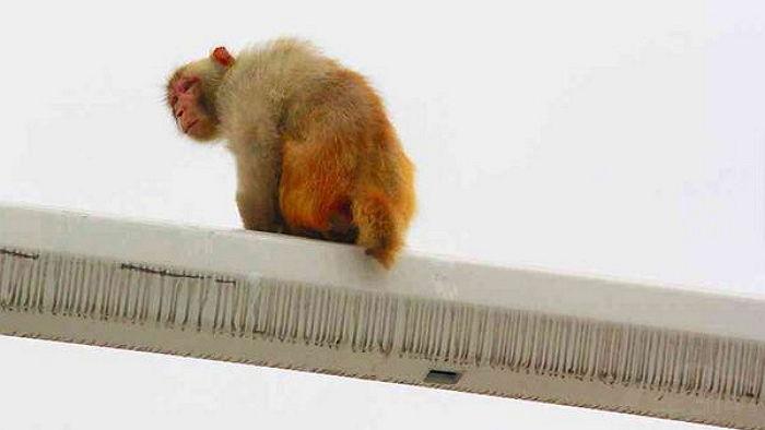【中国】女性運転手が急停止して追突事故「猿が赤信号に見えたの、信じて!」のサムネイル画像