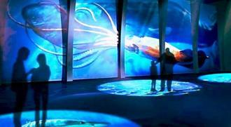 【衝撃】DMM水族館の経済効果がヤバすぎるwwwwwwwwwwwwwwwwwwのサムネイル画像