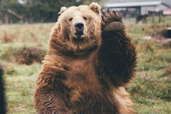 庭で米ぬか食ってたクマを爺((85)が木刀で撃退wwwwwwwwwwwのサムネイル画像