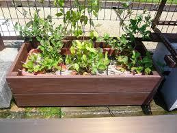 【大阪】空き家の庭のプランターの中から人骨が・・・のサムネイル画像