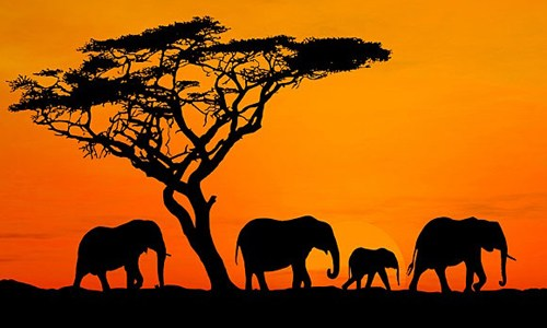 【国際】安倍首相 アフリカ支援に2億ドル「アフリカで産業人材の育成やインフラ投資に取り組む」のサムネイル画像