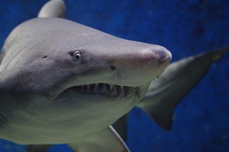 ヌルマンチョ司令官「中国人をサメの餌に」→ さすがに怒られるwwwwwwwwwwwwwwwwwのサムネイル画像