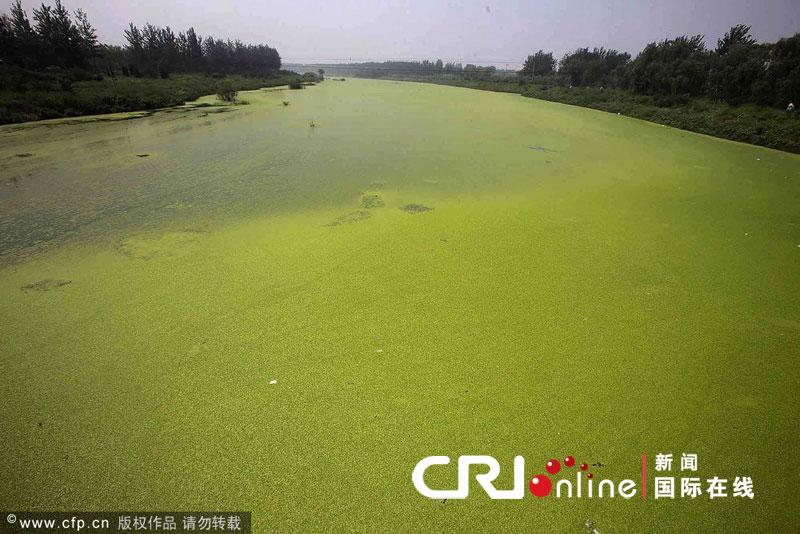 北京がヤバイ。北京がミドリ。北京の川が超絶に緑化した。ヤバイ。(画像あり)のサムネイル画像