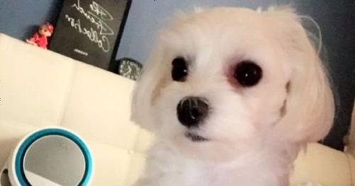 【驚愕】旅行の際に愛犬を病院に預ける → 病院は違う犬を返す → その結果・・・のサムネイル画像