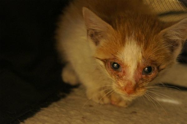 【画像あり】 捨て猫を拾いました。のサムネイル画像