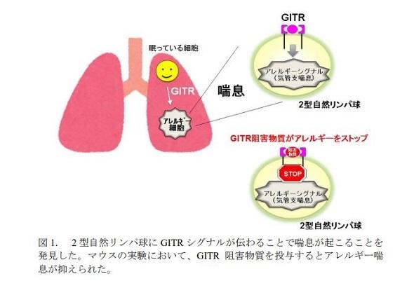 【朗報】気管支ぜんそく発症の原因が判明!!!のサムネイル画像