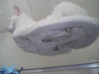猫が勝手に児童ポルノをダウンロードしたはずなのに懲役12年のサムネイル画像