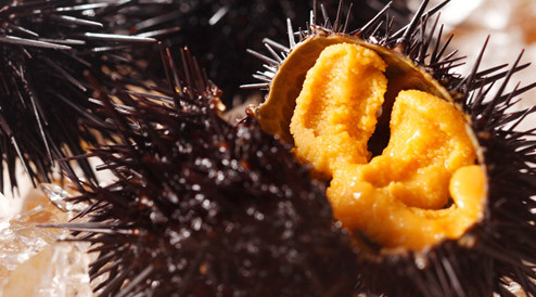 青森県「ウニがクソ余って駆除しきれないんだけど、お前ら食いにきてくれ」のサムネイル画像