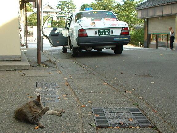 【悲報】タクシー呼び止めようと車道に出た女性の末路・・・のサムネイル画像