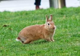 【鬼畜】少年の男3人 小学校で飼育されてたウサギをボール代わりにサッカーした結果・・・のサムネイル画像