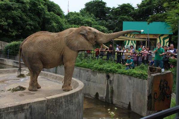 【炎上】「動物が雨ざらし!虐待だ!」東京新聞に投稿 → 動物園「取材確認もなしに嘘を書かれた・・・」 【井の頭自然文化園】のサムネイル画像