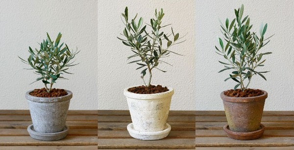 """韓国人「日本は庭先に置いてある """"鉢植え"""" が盗まれなくて羨ましい」 のサムネイル画像"""