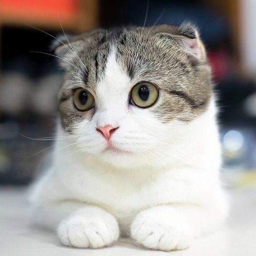 【動画】猫用に「迷路」を作ってみたったwwwwwwwwwwwのサムネイル画像