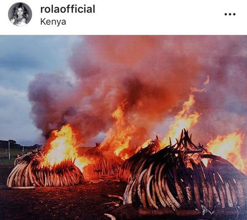 【画像】ローラさん、アフリカゾウの死を追悼のサムネイル画像