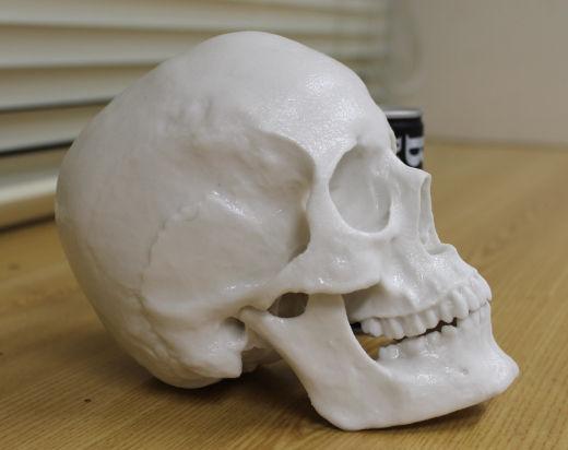 【衝撃】高校の生物室に頭蓋骨、標本だと思ってたら本物だった → 警察に届け出た結果・・・のサムネイル画像