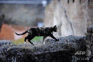 【衝撃】男性、ネコにかまれ「狂犬病」に!!!→ その結果が・・・・・のサムネイル画像