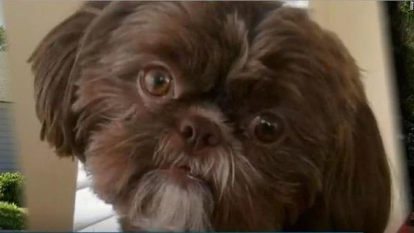 【ええ…】遺言「愛犬と一緒に埋葬を」→犬の末路が ヤ バ い・・・・・のサムネイル画像