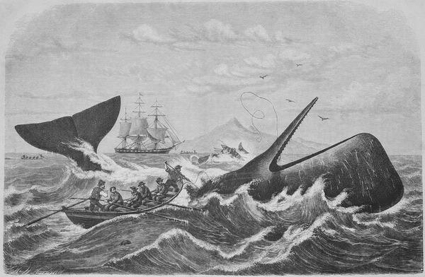 【衝撃】駐ロス総領事「日本はならず者ではない!」 捕鯨批判に反論寄稿へ!!!!!