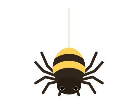 spider_9484-450x337