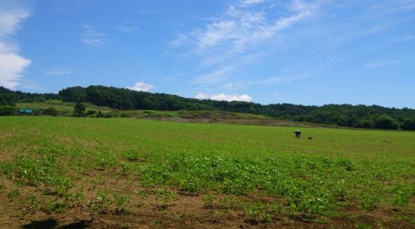 【朗報】北海道農家「仕事のない奴ちょっと来い!」→ 未就職の若者を募集wwwwwwwwwwwwwのサムネイル画像