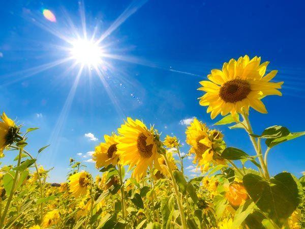 【夏】猛暑で「あの商品」が爆売れへwwwwwwwwwwwのサムネイル画像