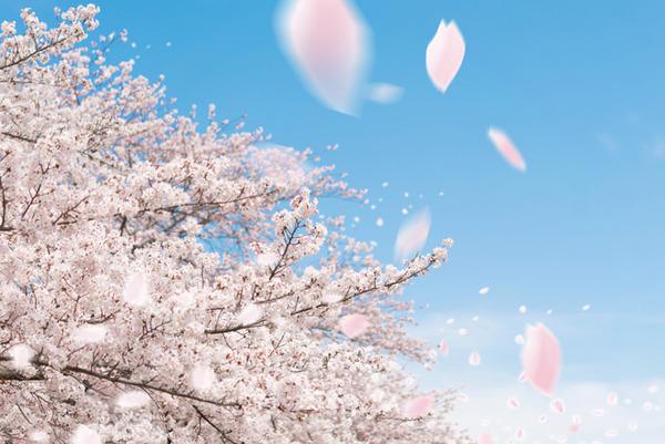 【緊急悲報】春終了のお知らせwwwwwwwwwwwwwwwwwwwwwwのサムネイル画像