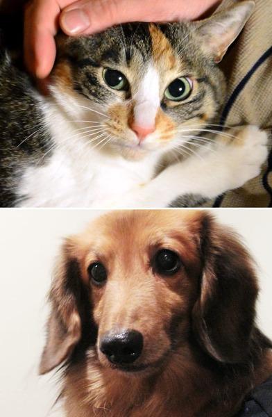 【速報】ネコ、イヌに勝利wwwwwwwwwwwwwwwwwwのサムネイル画像