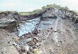 【衝撃】虫さん、4万2000年ぶりに息を吹き返すwwwwwwwwwww のサムネイル画像