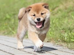 【衝撃】犬の成長を同じ格好で「自撮り」し続けた男性が話題にwwwwwwwwwwwwwwww(画像あり)