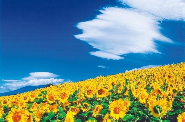 【悲報】日本の「夏」、暑すぎたwwwwwwwwwwwwwwwwwwwwのサムネイル画像