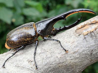 【衝撃】昆虫の「栄養価」がやばすぎる!!!→ その結果wwwwwwwwwwwwwwwwwのサムネイル画像