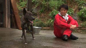 【志村どうぶつ園】坂上忍に引き取られた義足犬、サンタの末路が・・・・・のサムネイル画像
